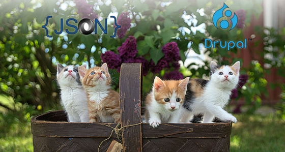 Photo of kittens looking at JSON and Drupal logos